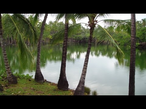 Fish Ponds In Hawaii