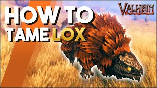 How To Tame L๐x In Valheim! A Taming Guide For Lox