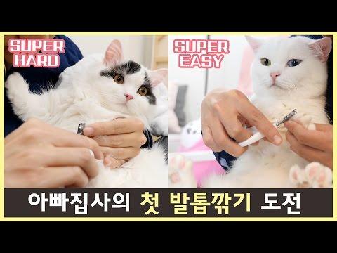 고양이 집사의 첫 발톱깎기 도전