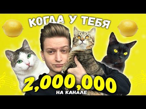 Утро ютубера с 2 000 000 подписчиков и котами. Приколы с животными / SANI vlog