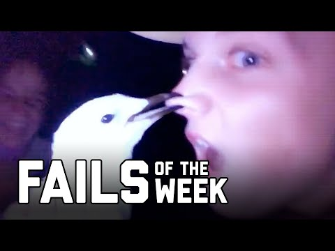 Bird is the Word: Fails of the Week (August 2020) | FailArmy