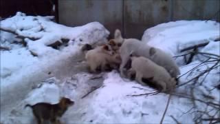 Собаки Бездомные дворовые щенки 31 декабря 2014 года