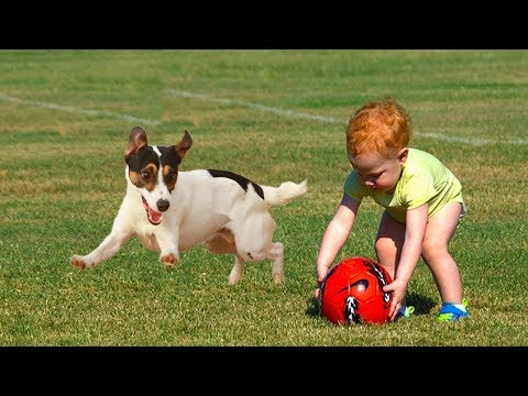 Smart Dogs Play Catching Ball With Babies | Funny Pets