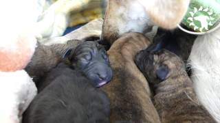 Ariel Gives Birth A Few Days After Being Rescued On The Streets!