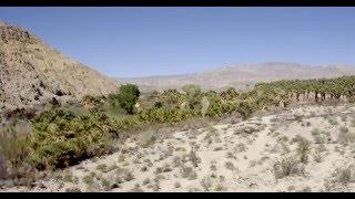 Coachella Valley Preserve | near Palm Springs, California