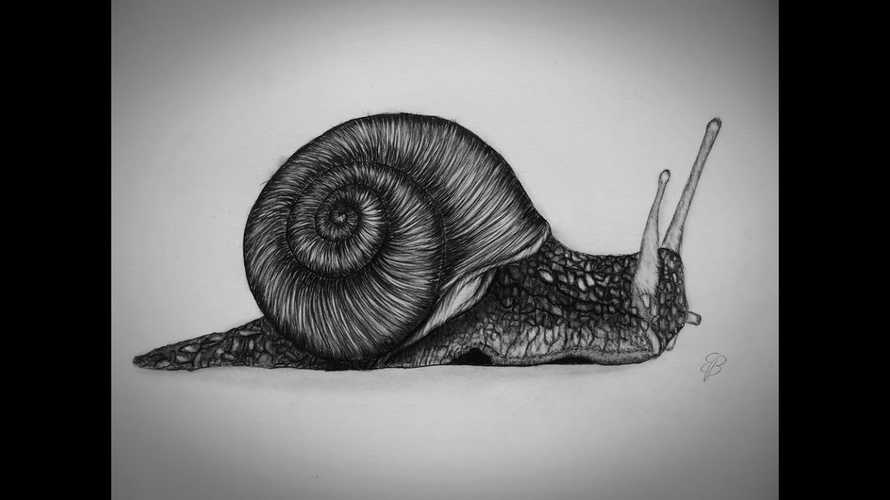How to draw a snail step by step tutorial youtube for How do you draw a snail