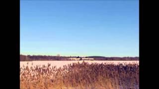 Labradors - Ainārs Mielavs
