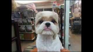 дурацкие стрижки животных Мой хозяин идиот Strange animal haircuts