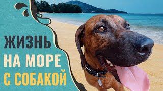 ОТДЫХ на море с собакой ЭТО НЕ ПРОСТО. Жалеем, что редко ходим на море. Обзор пляжа Камала. Пхукет.