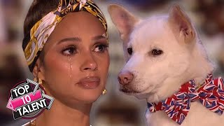 TOP 10 MOST MAGICAL Animals On Got Talent!