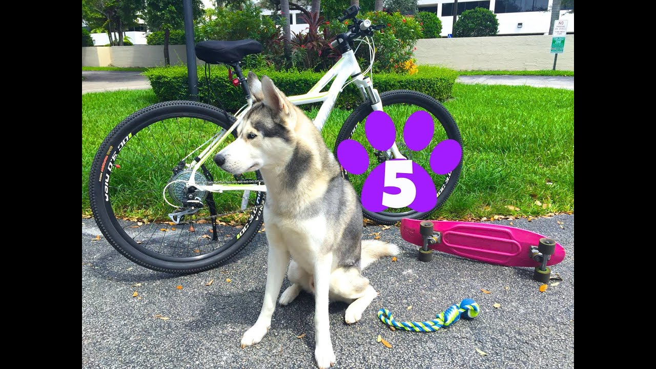 Getting Your Dog's Energy Out! (Top 5 Exercises!)