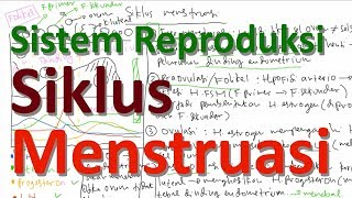 Tahapan Siklus Menstruasi