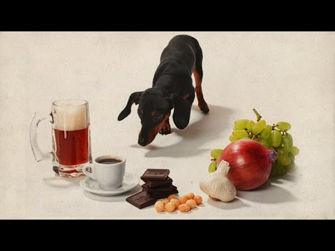 Dog Food Reviews - 5 Foods You Should Never Feed Your Dogs