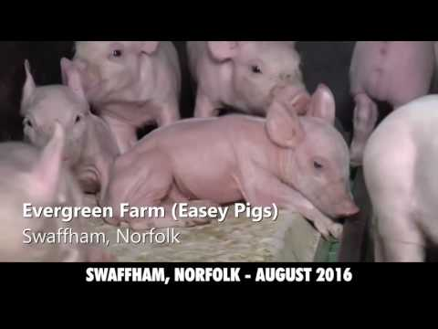 RE-UPLOAD - 2016 Exposed The Reality Of The UK Meat Dairy + Egg Industries Revealed earthlings vegan