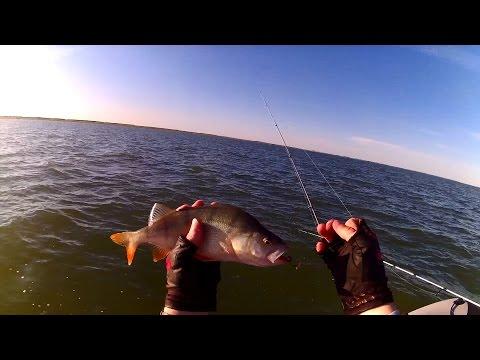 Тест мотора YAMAHA 5 CMHS + немного рыбалки