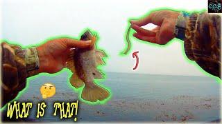 ROCKFISH eat some WEIRD THINGS, fishing Monterey Coast Guard Pier.