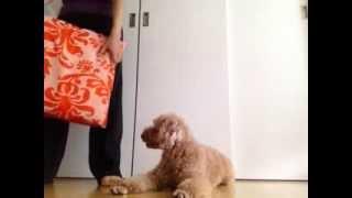 犬のしつけをクリッカートレーニングで → http://gaditto.com 数多くの...