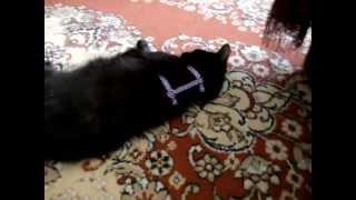 Шлейка-успокоитель кошки.