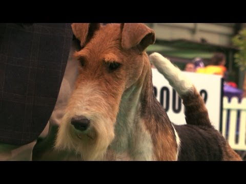Birminhgm National 2015 - Terrier group FULL