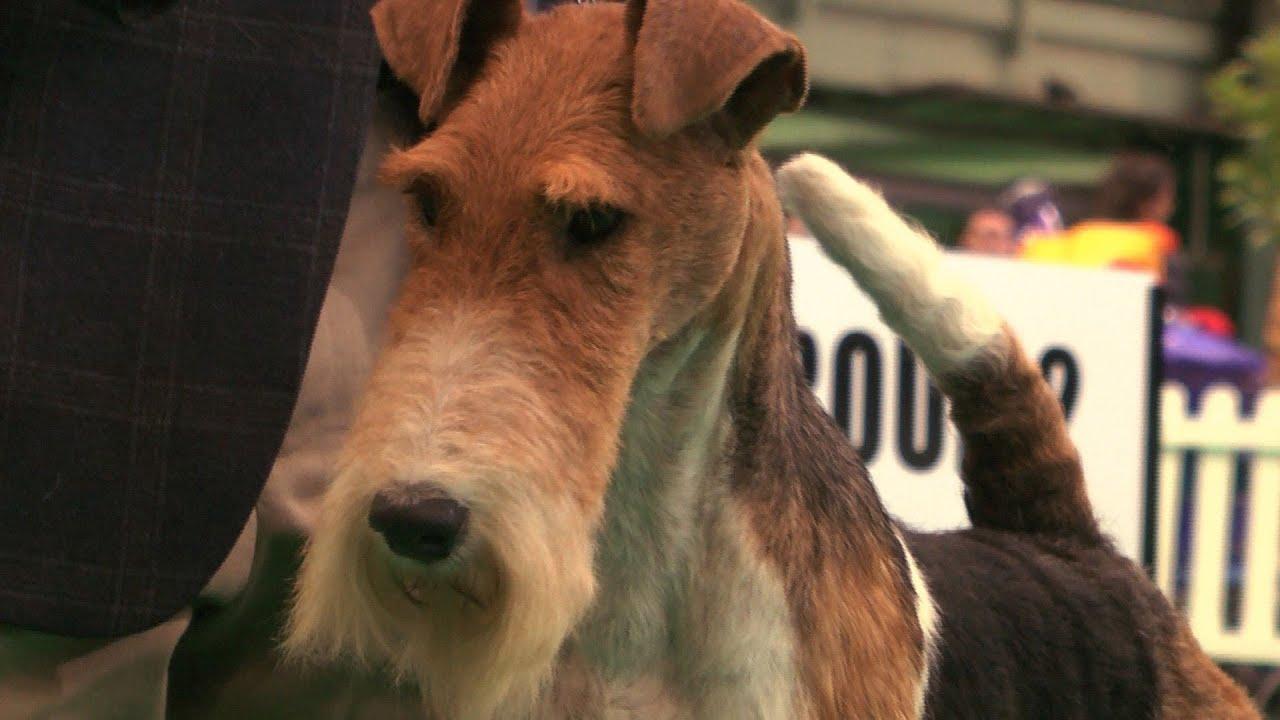 National Dog Show Terrier Group Winner
