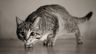Много котов охотятся на нечто...