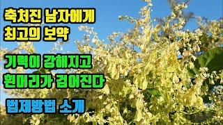 하수오-최고의 강정.강장약초! 중국의 3대약초, 허리와…