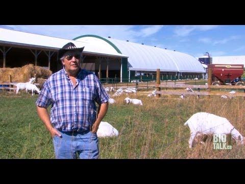 OAFT - Grasshill Farm Nov 29, 2013