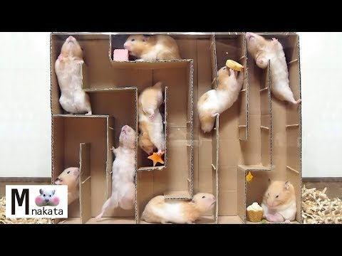 hamster-maze!escapecreative-cardboard-labyrinth!diy!surprise-ending-don't-miss-it!funny-&-cute