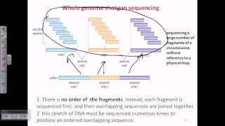 Whole genome shotgun sequencing