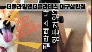 대구 운동 맛집 상인동 더플라잉앤더필라테스