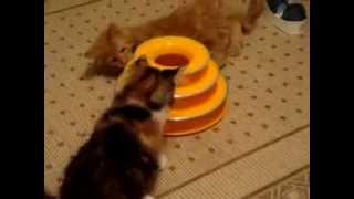 """Игрушка для кошки """"Игровая пирамидка"""""""