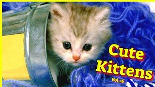 Cute Kittens Vol 16  Funny Cat Videos 2021  Cat Videos