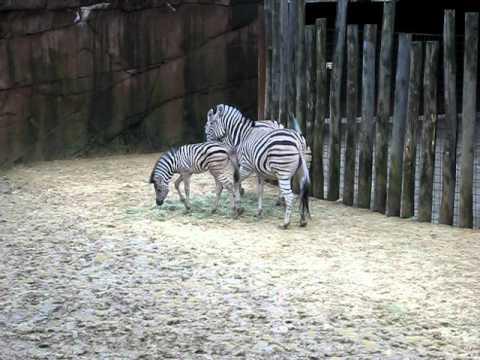 gaiapark kerkrade zoo review meet