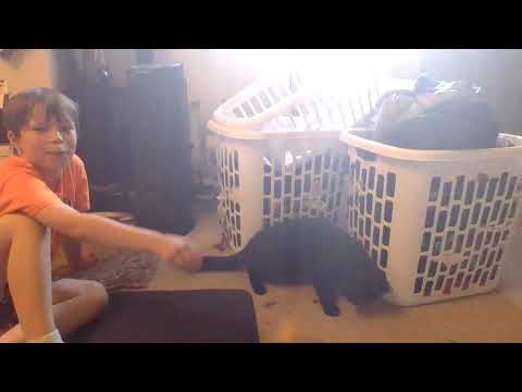 cat documentary 3