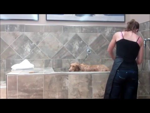 Blossom and bosley getting a bath at petvalu youtube blossom and bosley getting a bath at petvalu solutioingenieria Choice Image
