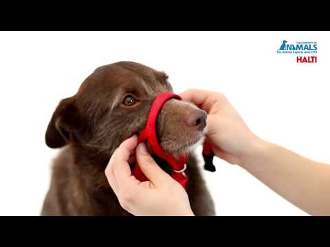 How To Fit The HALTI Headcollar