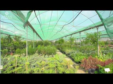 Green Forest Paphos Nursery