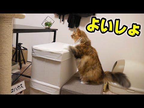 階段を設置したら猫は使ってくれる?