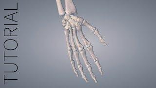 breadcrumb trail essential anatomy 5 tutorial