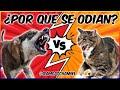 ¿Por Qué Los Perros Odian a Los Gatos? La Verdad Detrás Del Mito 🐶🐱