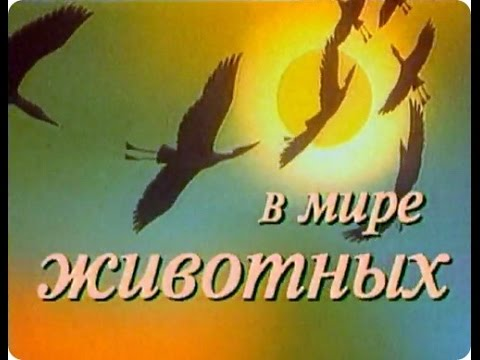 В мире животных с Николаем Дроздовым. Выпуск №38