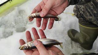 Рыбалка на корюшку и сига Уловистая мормышка