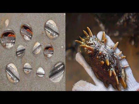 小章赶海找对沙滩了,沙子里卧着一窝一窝的毛蛤蜊。随便捡了一桶    【赶海小章】