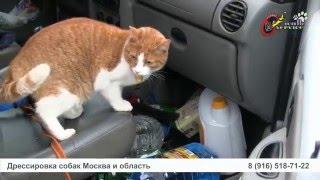 Кот и порселен
