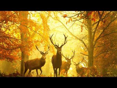 Michael Hoppé** October Poem**