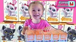 Sweet Box Пухнастики Кішечки і Котики ✿ ВСЯ КОЛЕКЦІЯ розпакування іграшок російською Cats Surprise