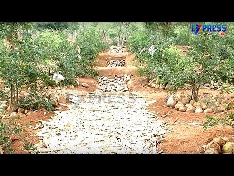 Innovative Water Harvesting and Bio waste management technics By Dr Syamsundar Reddy IIIT ExpressTV
