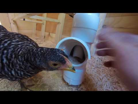 Chicken Coop Update, Feeders Watering setup and Breeds