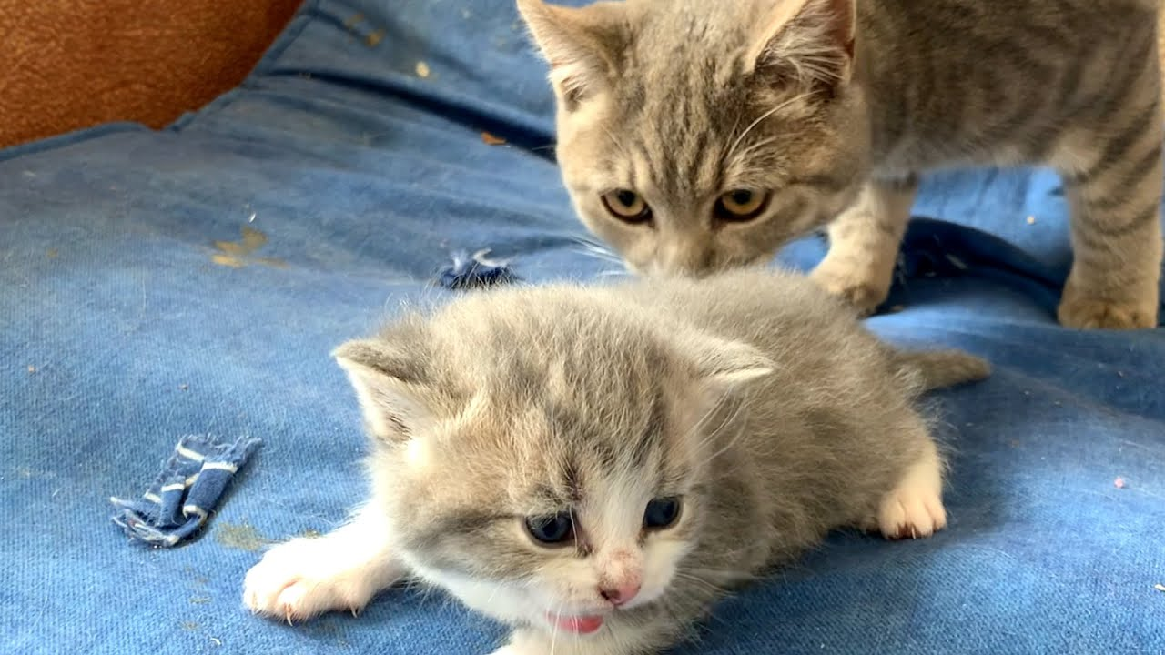 First time kitten Johnny met a cat Street (not his dad)