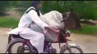 Cow on bike in pakistan | Pakistani funny clip | Cow funny video